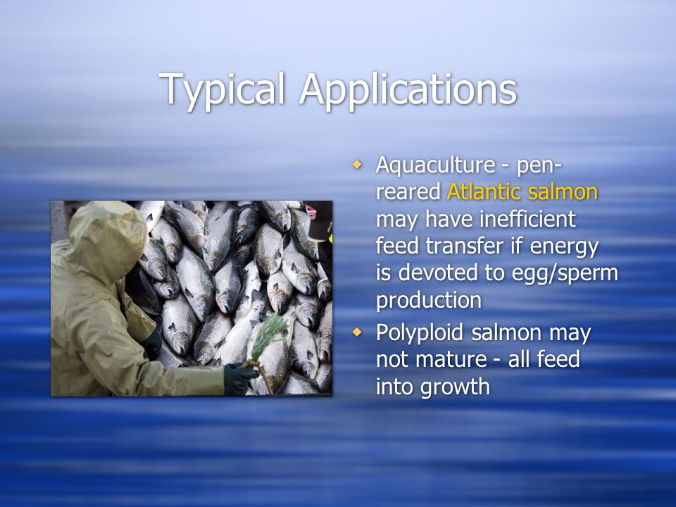 Typical Applications  Aquaculture - pen- reared Atlantic salmon may have inefficient feed transfer if energy is devoted to egg/sperm production  Polyploid salmon may not mature - all feed into growth