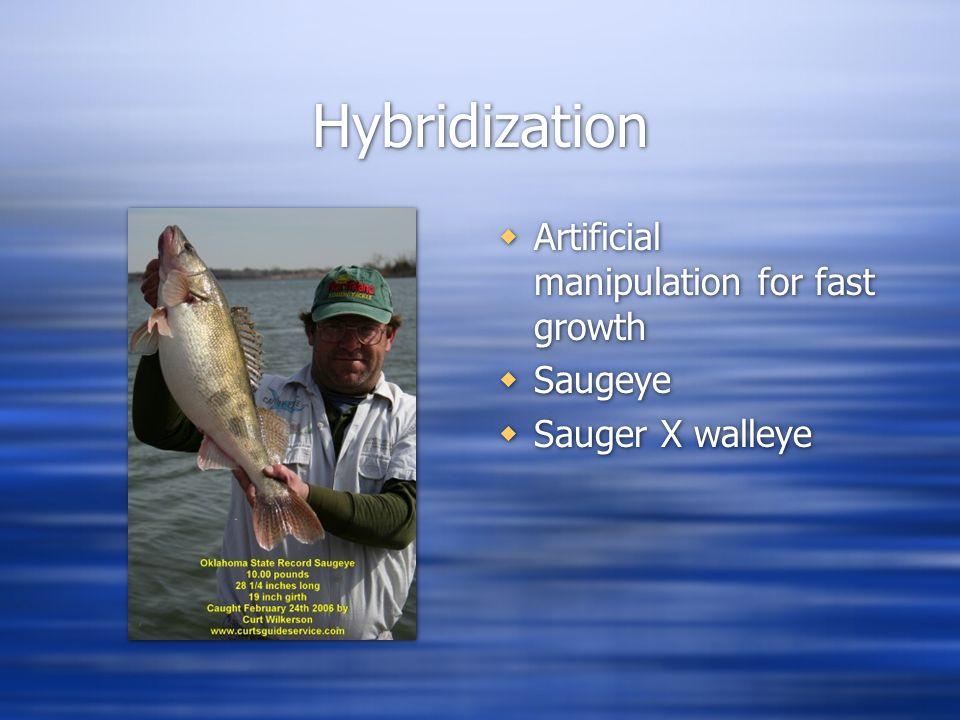 Hybridization  Artificial manipulation for fast growth  Saugeye  Sauger X walleye