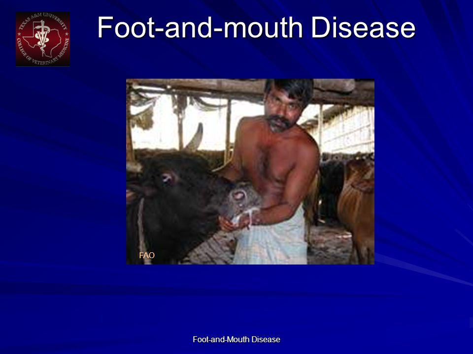 Foot-and-Mouth Disease Foot-and-mouth Disease FAO