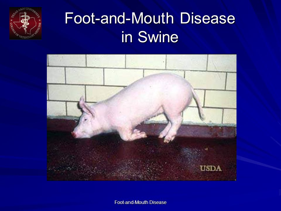 Foot-and-Mouth Disease in Swine Foot-and-Mouth Disease in Swine