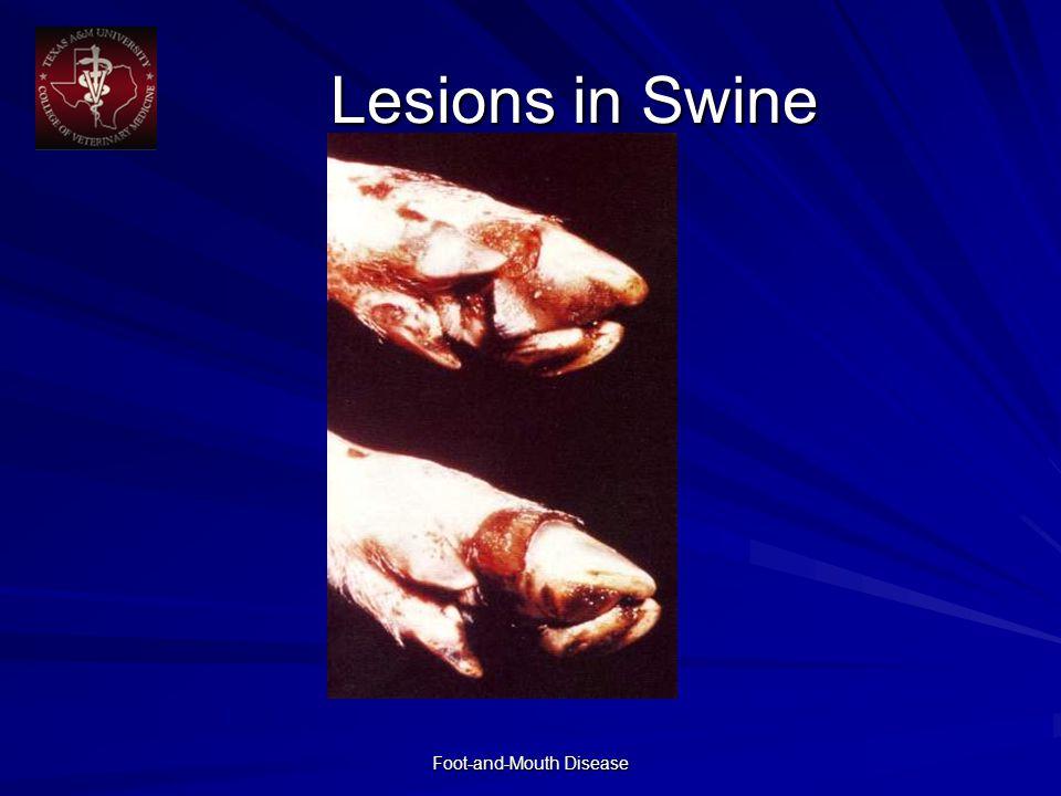 Lesions in Swine