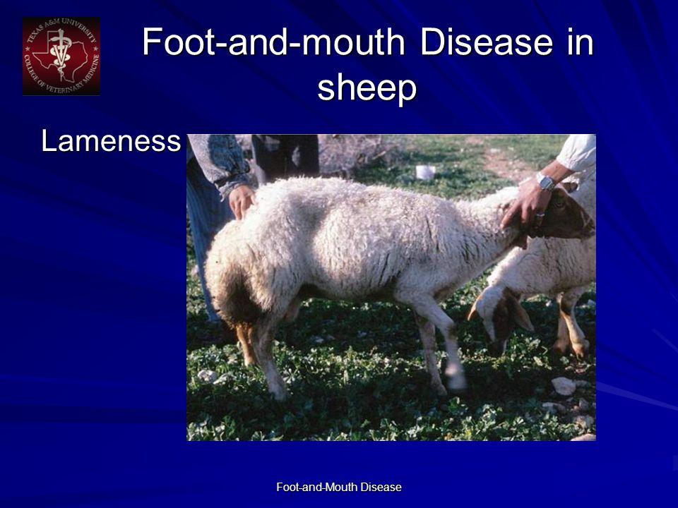 Foot-and-Mouth Disease Foot-and-mouth Disease in sheep Lameness