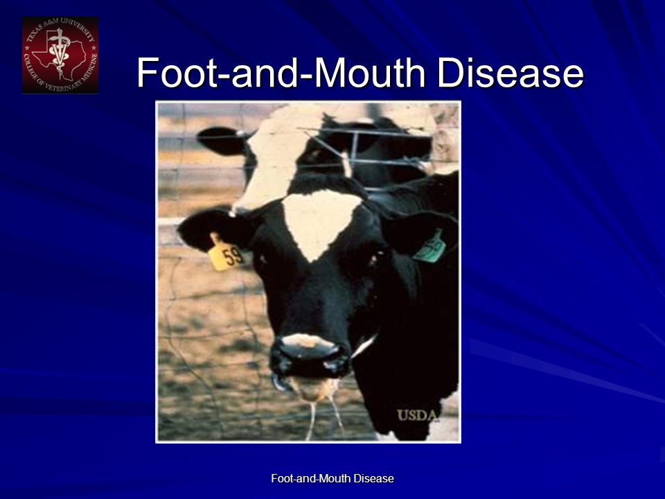 Foot-and-Mouth Disease