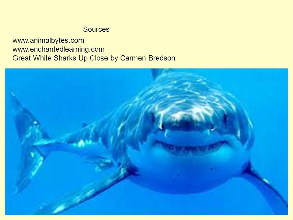 www.animalbytes.com www.enchantedlearning.com Great White Sharks Up Close by Carmen Bredson Sources