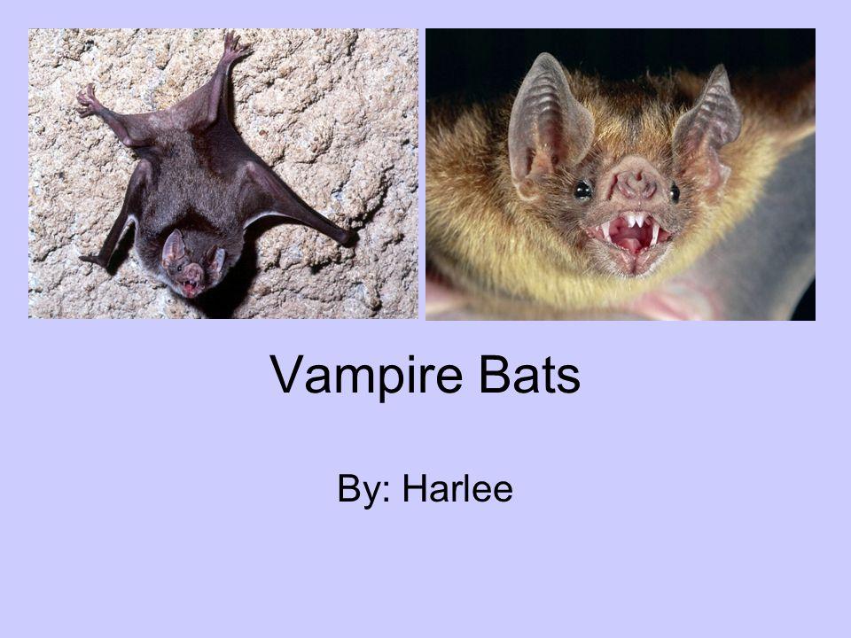 Vampire Bats By: Harlee