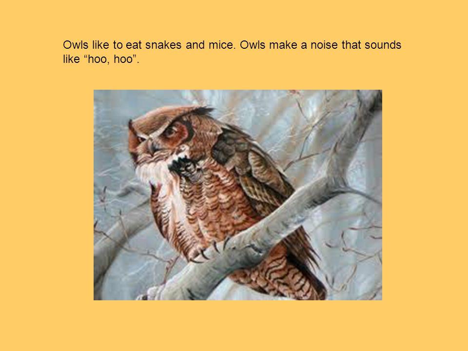 """Owls like to eat snakes and mice. Owls make a noise that sounds like """"hoo, hoo""""."""