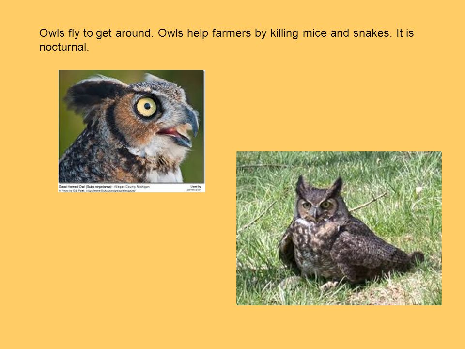 Owls fly to get around. Owls help farmers by killing mice and snakes. It is nocturnal.