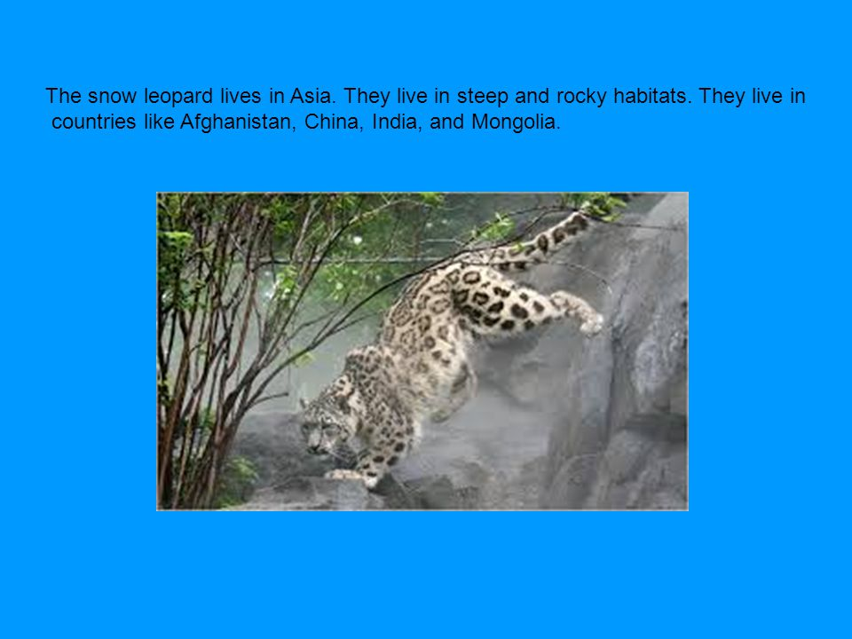 The snow leopard lives in Asia. They live in steep and rocky habitats. They live in countries like Afghanistan, China, India, and Mongolia.