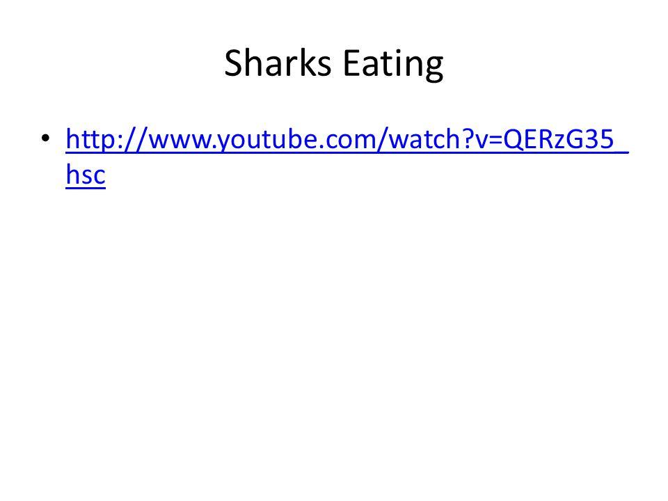 Sharks Eating http://www.youtube.com/watch?v=QERzG35_ hsc http://www.youtube.com/watch?v=QERzG35_ hsc