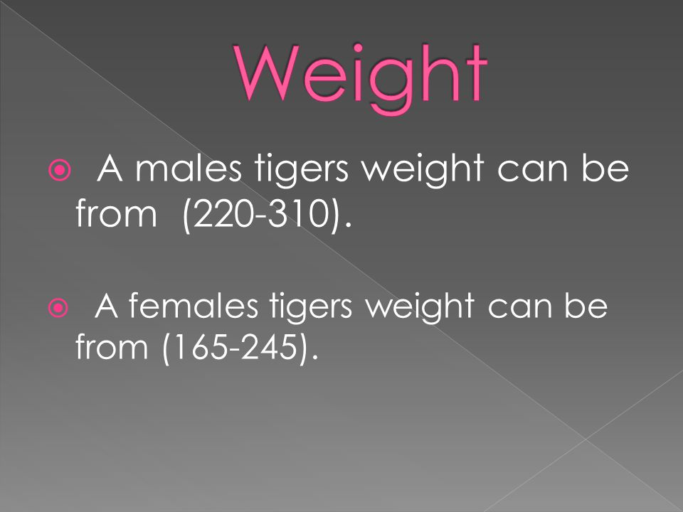  A males tigers weight can be from (220-310).  A females tigers weight can be from (165-245).