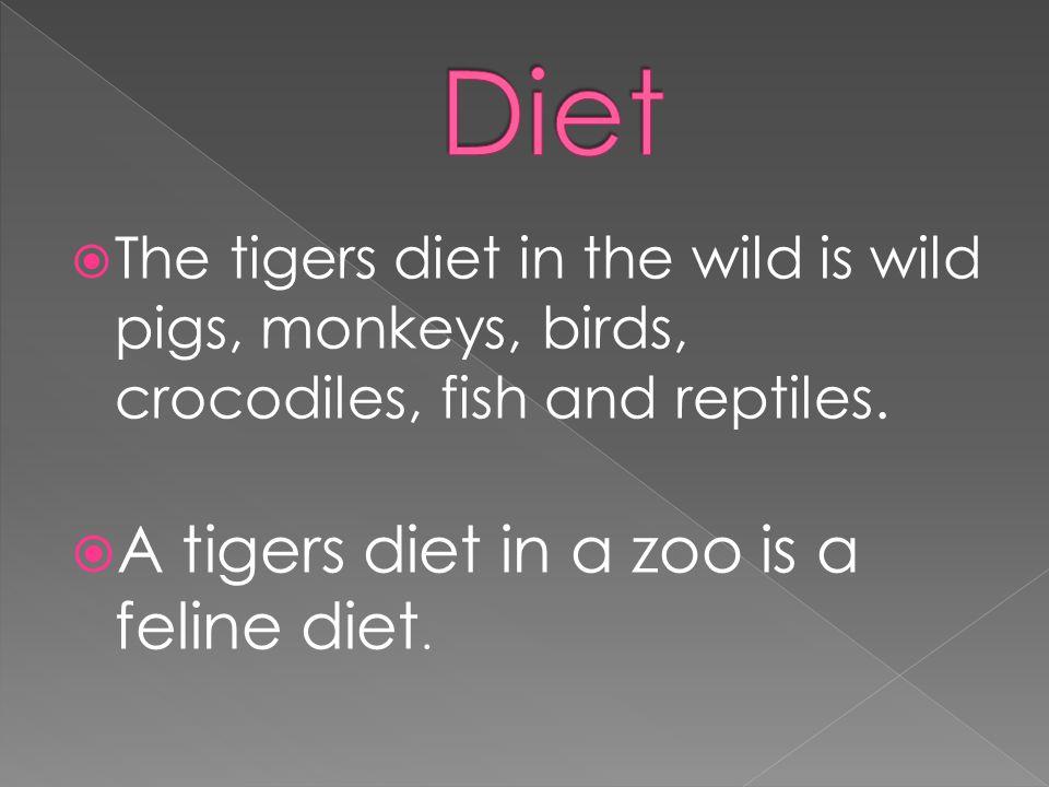  The Sumatran Tigers only predators is humans.