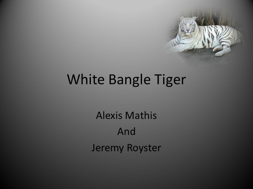 White Bangle Tiger Alexis Mathis And Jeremy Royster