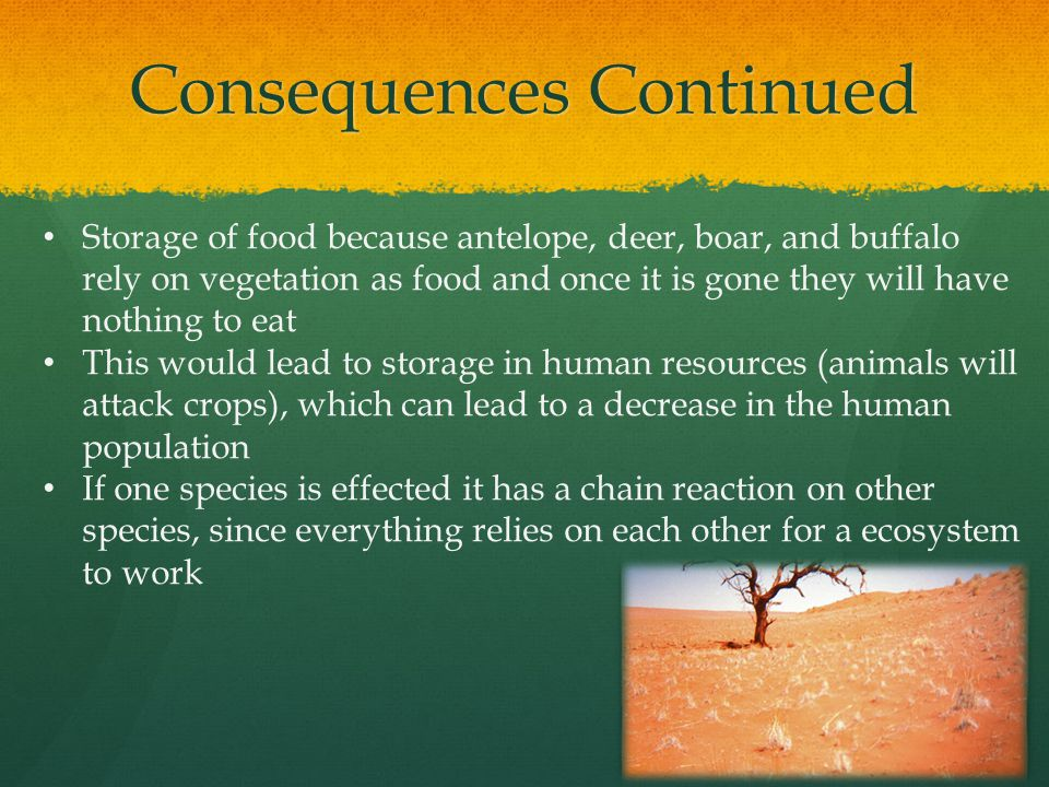 Consequences Continued Storage of food because antelope, deer, boar, and buffalo rely on vegetation as food and once it is gone they will have nothing to eat This would lead to storage in human resources (animals will attack crops), which can lead to a decrease in the human population If one species is effected it has a chain reaction on other species, since everything relies on each other for a ecosystem to work