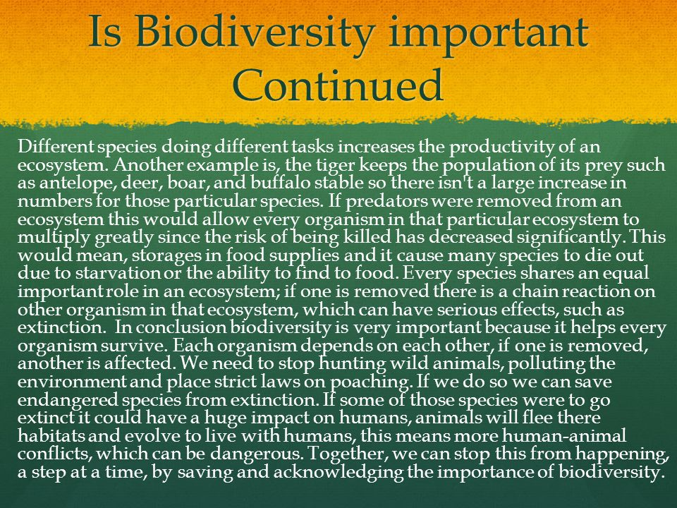 Is Biodiversity important Continued Different species doing different tasks increases the productivity of an ecosystem. Another example is, the tiger