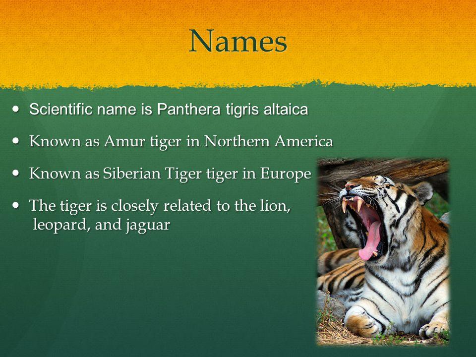 Bibliography WWF - Threats to tigers.(n.d.). WWF.