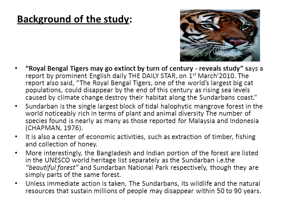 Background of the study: Royal Bengal Tigers may go extinct by turn of century - reveals study says a report by prominent English daily THE DAILY STAR, on 1 st March'2010.