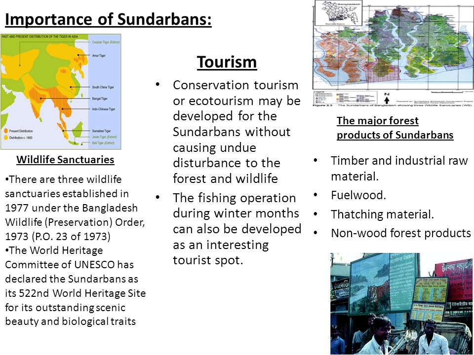 Importance of Sundarbans: The major forest products of Sundarbans Timber and industrial raw material.