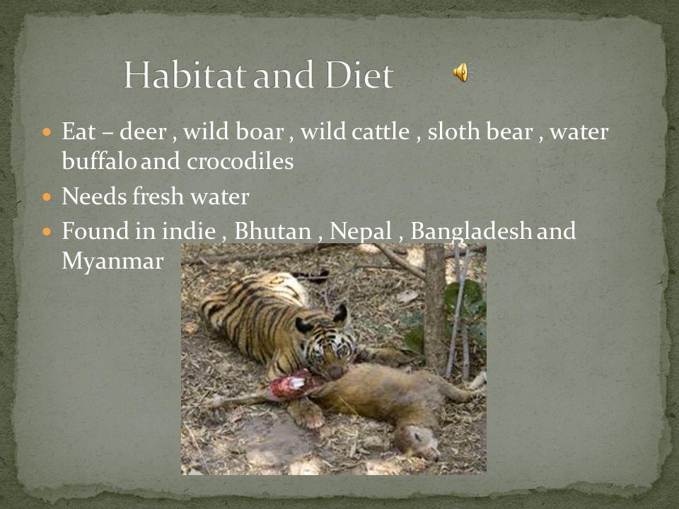 Eat – deer, wild boar, wild cattle, sloth bear, water buffalo and crocodiles Needs fresh water Found in indie, Bhutan, Nepal, Bangladesh and Myanmar