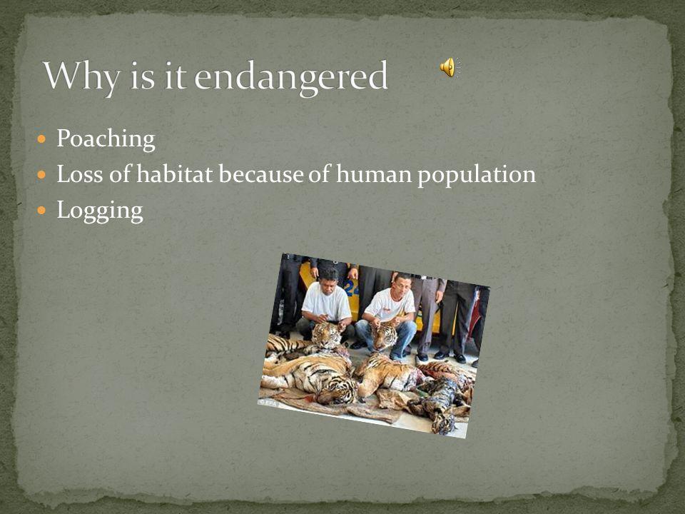 Poaching Loss of habitat because of human population Logging