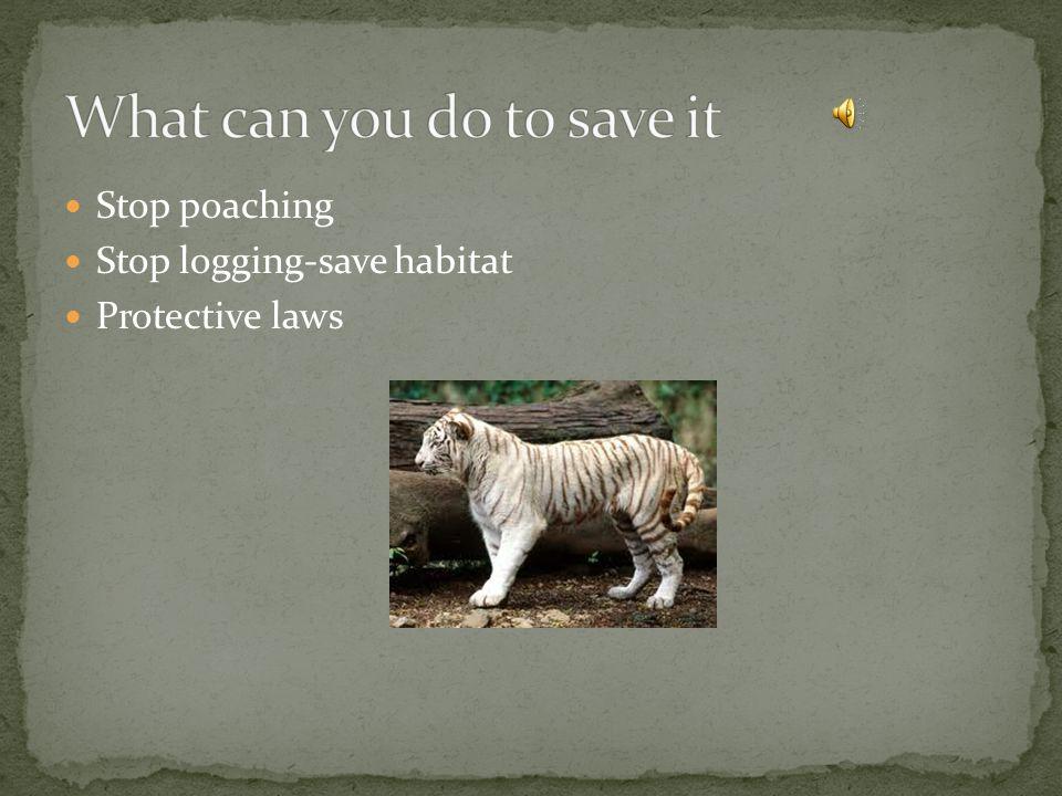 Stop poaching Stop logging-save habitat Protective laws