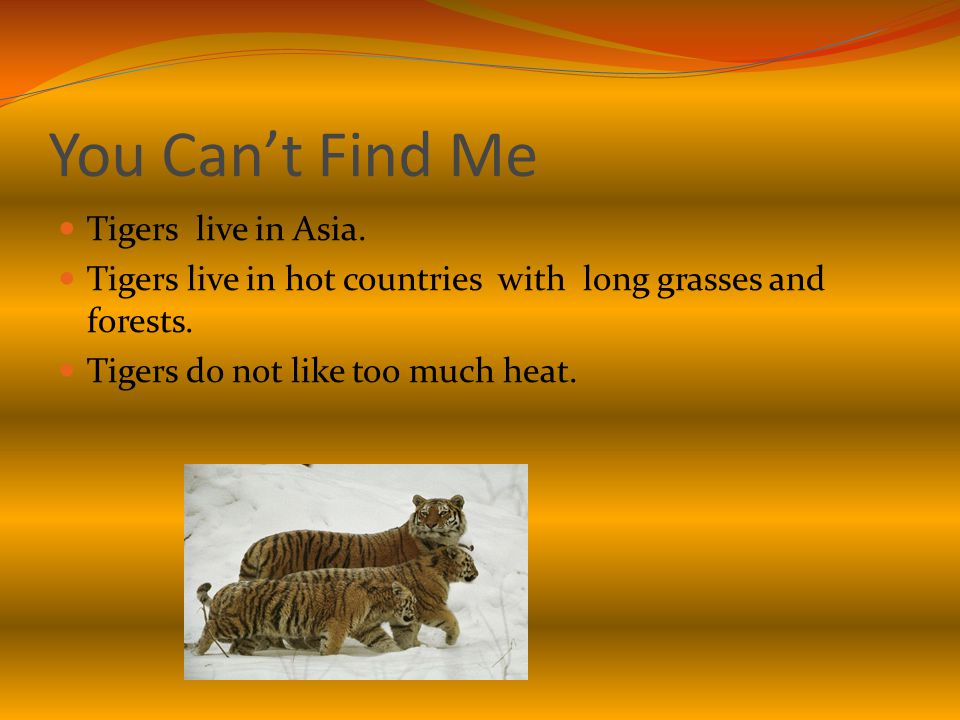 You Can't Find Me Tigers live in Asia. Tigers live in hot countries with long grasses and forests.