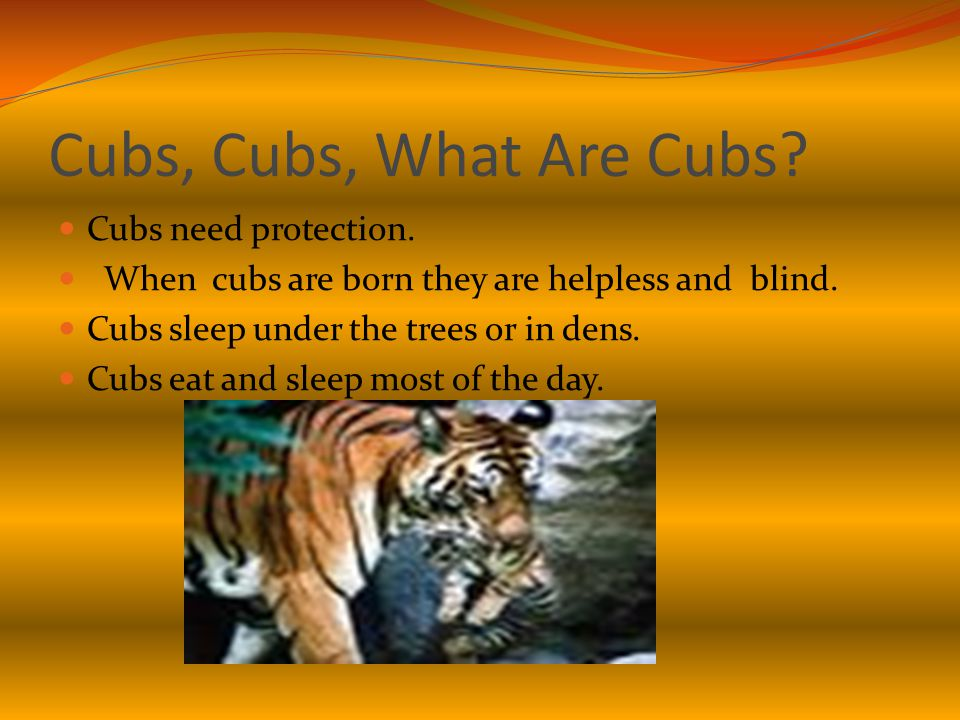 Cubs, Cubs, What Are Cubs. Cubs need protection. When cubs are born they are helpless and blind.