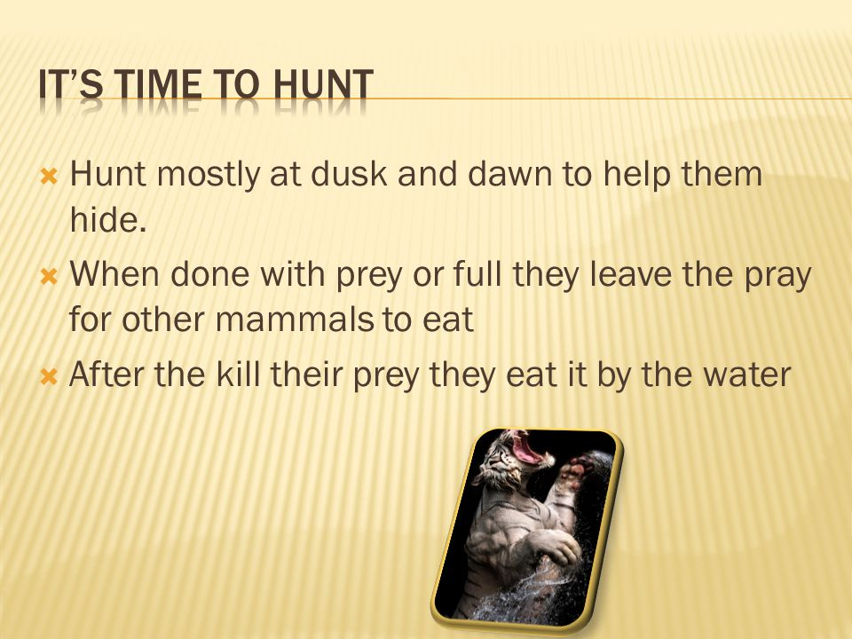  Hunt mostly at dusk and dawn to help them hide.