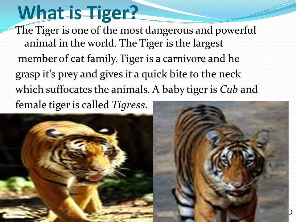 Kinds of Tigers.There are six kind of Tigers in the World.