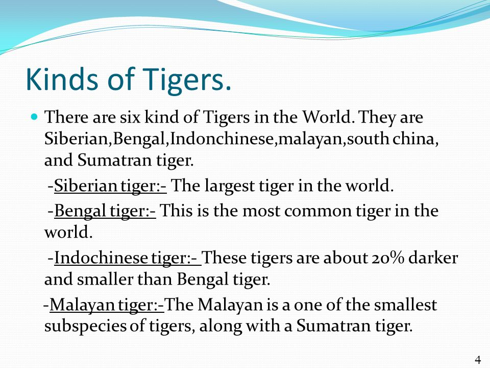 Kinds of Tigers. There are six kind of Tigers in the World.