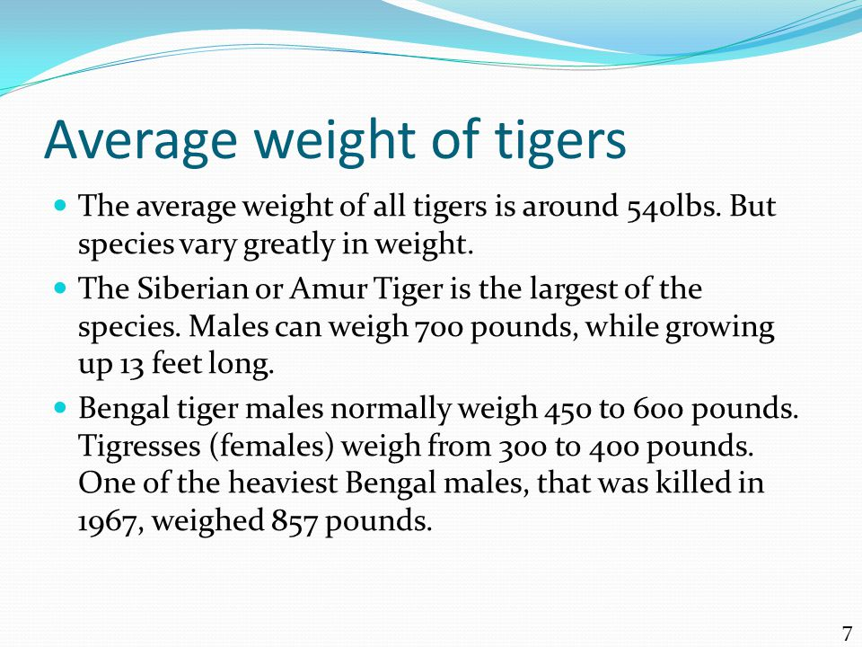 Average weight of tigers The average weight of all tigers is around 540lbs.