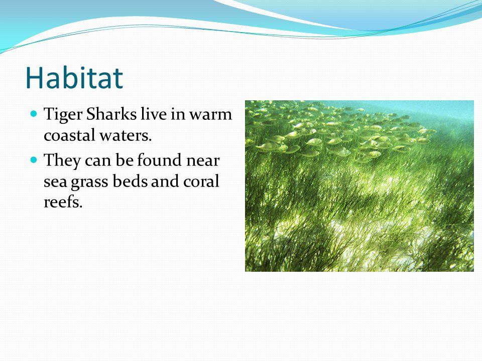 Habitat Tiger Sharks live in warm coastal waters.