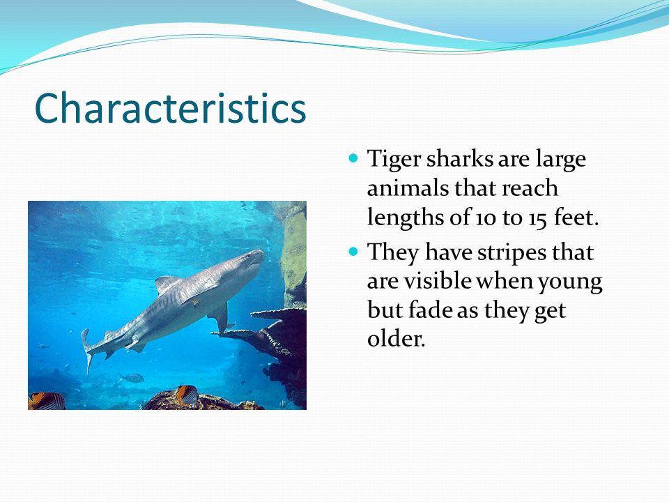 Bibliography Heithaus, Michael R. Tiger shark. World Book Student.