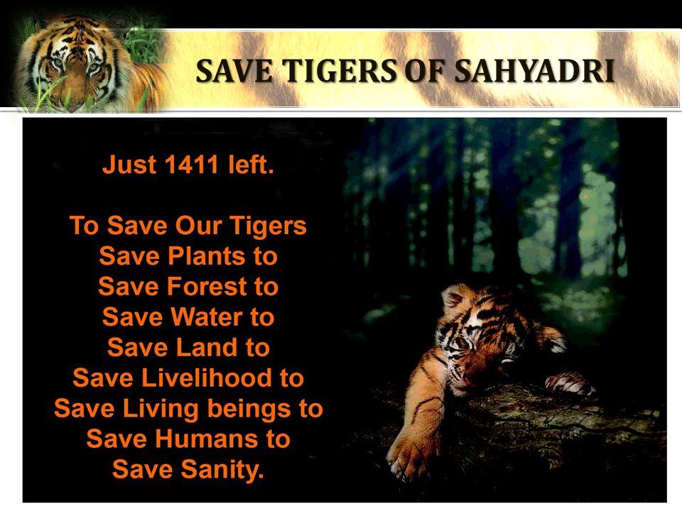 SAVE TIGERS OF SAHYADRI