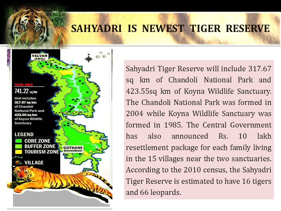 Sahyadri Tiger Reserve will include 317.67 sq km of Chandoli National Park and 423.55sq km of Koyna Wildlife Sanctuary.