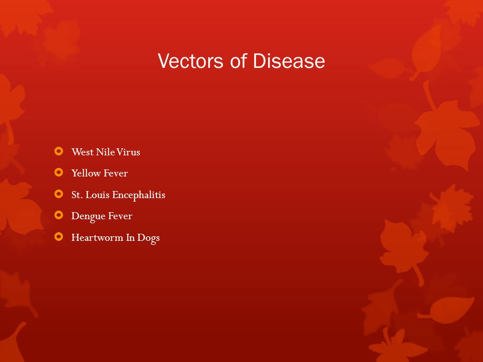 Vectors of Disease  West Nile Virus  Yellow Fever  St.