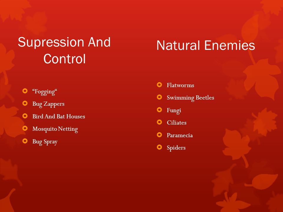 Supression And Control  Fogging  Bug Zappers  Bird And Bat Houses  Mosquito Netting  Bug Spray Natural Enemies  Flatworms  Swimming Beetles  Fungi  Ciliates  Paramecia  Spiders