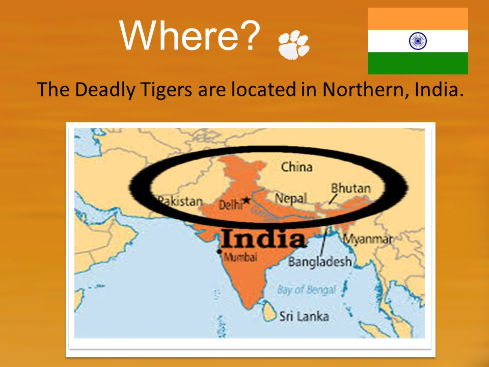 Where? The Deadly Tigers are located in Northern, India.