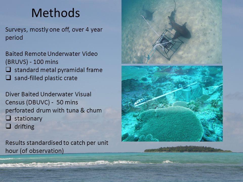Methods Surveys, mostly one off, over 4 year period Baited Remote Underwater Video (BRUVS) - 100 mins  standard metal pyramidal frame  sand-filled plastic crate Diver Baited Underwater Visual Census (DBUVC) - 50 mins perforated drum with tuna & chum  stationary  drifting Results standardised to catch per unit hour (of observation)