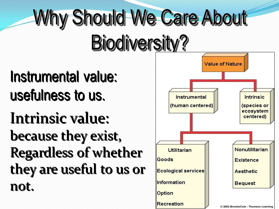 Why Should We Care About Biodiversity. Instrumental value: usefulness to us.