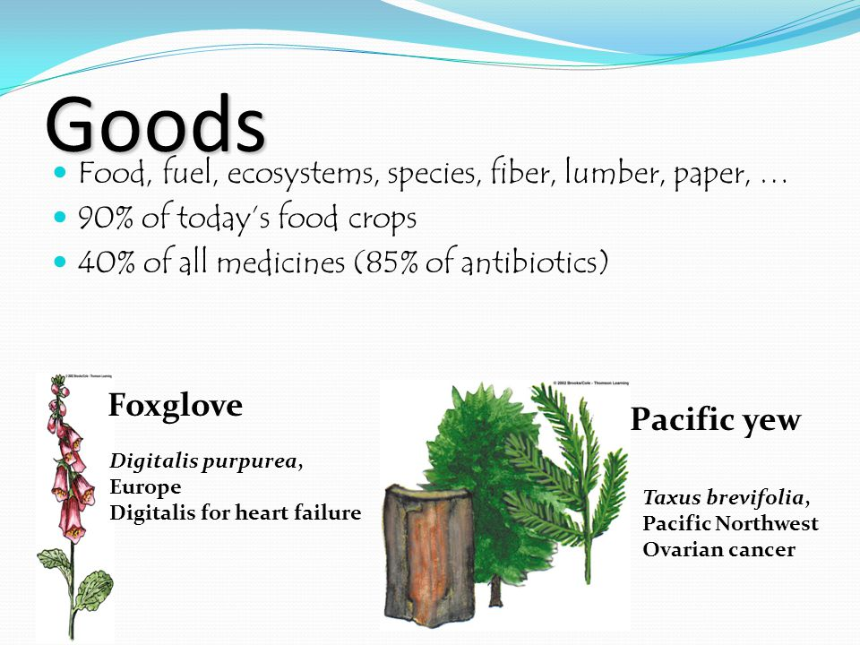 Goods Food, fuel, ecosystems, species, fiber, lumber, paper, … 90% of today's food crops 40% of all medicines (85% of antibiotics) Foxglove Digitalis purpurea, Europe Digitalis for heart failure Pacific yew Taxus brevifolia, Pacific Northwest Ovarian cancer