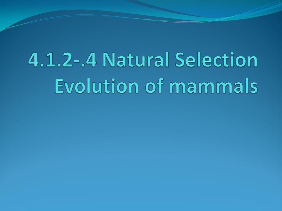 http://www.pbs.org/wgbh/evolution/educators/teachstuds/svideos.html