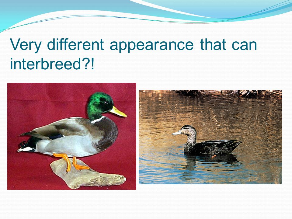 Very different appearance that can interbreed !