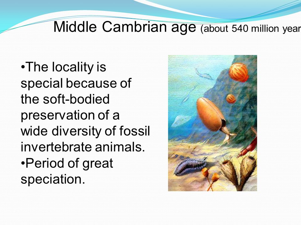 Middle Cambrian age (about 540 million years ago) The locality is special because of the soft-bodied preservation of a wide diversity of fossil invertebrate animals.