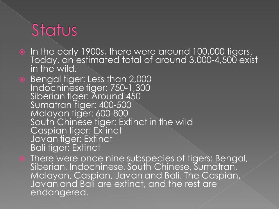  In the early 1900s, there were around 100,000 tigers.