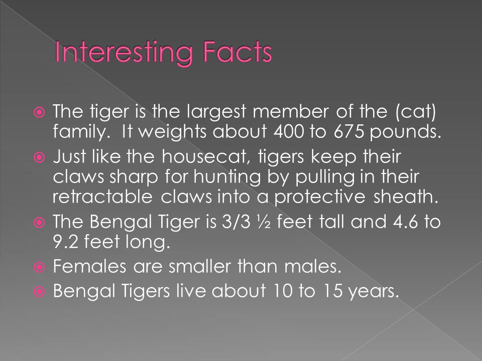  The tiger is the largest member of the (cat) family.