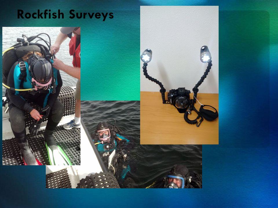 Rockfish Surveys