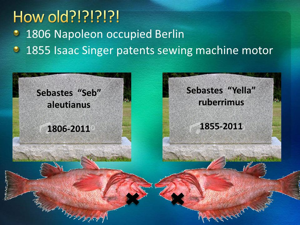 1806 Napoleon occupied Berlin 1855 Isaac Singer patents sewing machine motor Sebastes Seb aleutianus 1806-2011 Sebastes Yella ruberrimus 1855-2011