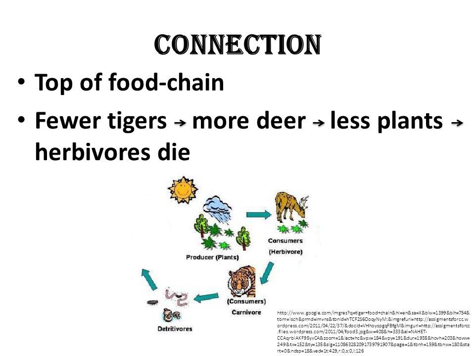 Unique Biggest cats Like to Swim No two have same stripe patterns http://www.google.com/search q=indian+tiger&hl=en&prmd=imvns&source =lnms&tbm=isch&ei=0ES1T6GYIZPZiAKeoP2hAg&sa=X&oi=mode_link&ct=mo de&cd=2&sqi=2&ved=0CGUQ_AUoAQ&biw=1024&bih=644