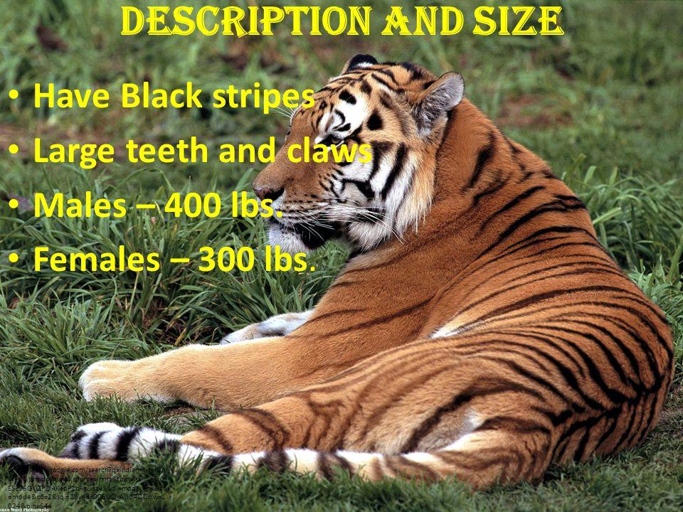 Connection Top of food-chain Fewer tigers more deer less plants herbivores die http://www.google.com/imgres q=tiger+food+chain&hl=en&sa=X&biw=1399&bih=754& tbm=isch&prmd=imvns&tbnid=hTCF2S6OoqyNyM:&imgrefurl=http://assigmentsforcc.w ordpress.com/2011/04/22/37/&docid=VHhoyspgqFBfgM&imgurl=http://assigmentsforcc.files.wordpress.com/2011/04/food3.jpg&w=408&h=333&ei=NAHET- CCAqrbiAKF95yxCA&zoom=1&iact=hc&vpx=184&vpy=191&dur=1938&hovh=203&hovw= 249&tx=152&ty=135&sig=110863282091739791907&page=1&tbnh=159&tbnw=180&sta rt=0&ndsp=18&ved=1t:429,r:0,s:0,i:126