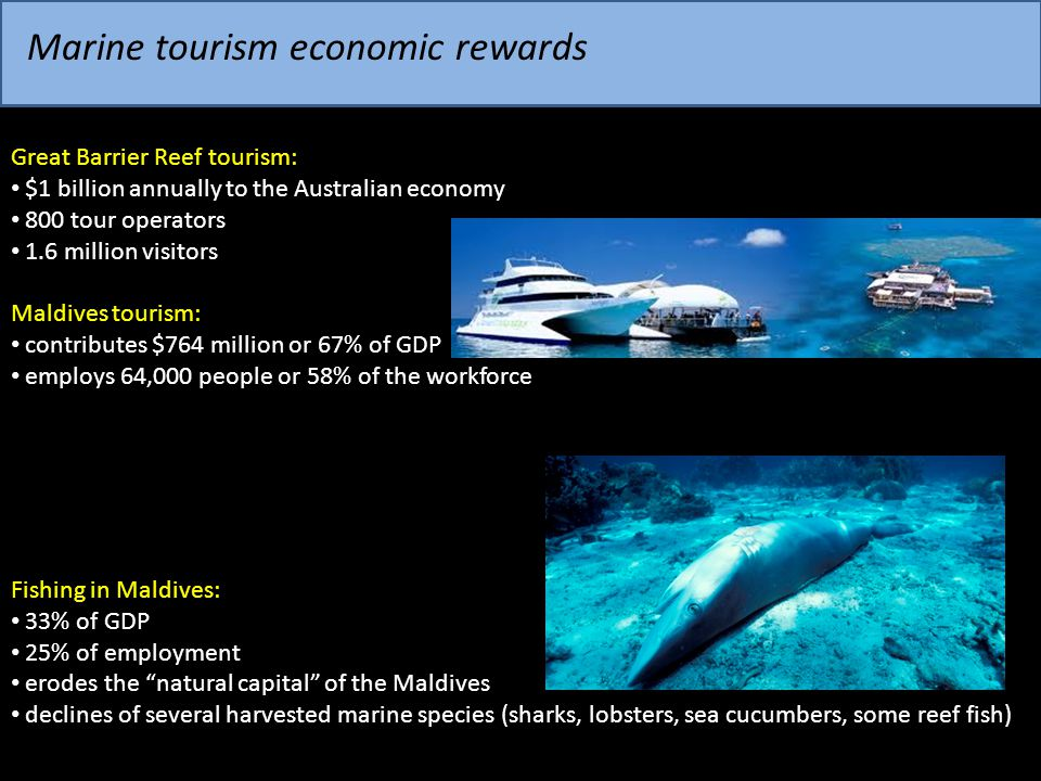 Marine tourism economic rewards Great Barrier Reef tourism: $1 billion annually to the Australian economy 800 tour operators 1.6 million visitors Mald